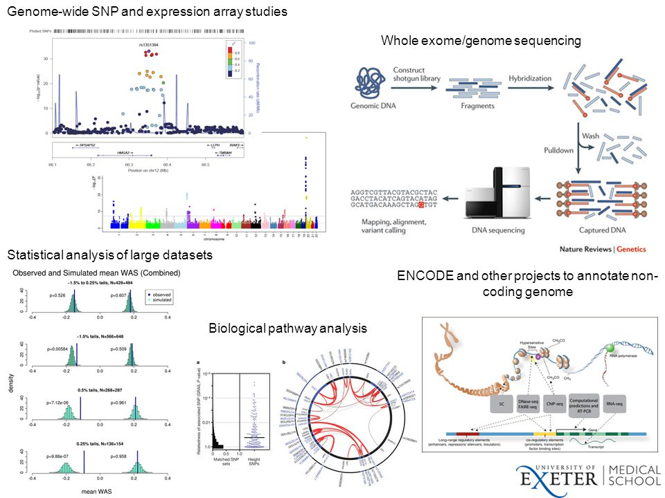 Whole exome/genome sequencing ENCODE and other projects to annotate non- coding genome Genome-wide SNP and expression array studies Biological pathway analysis Statistical analysis of large datasets
