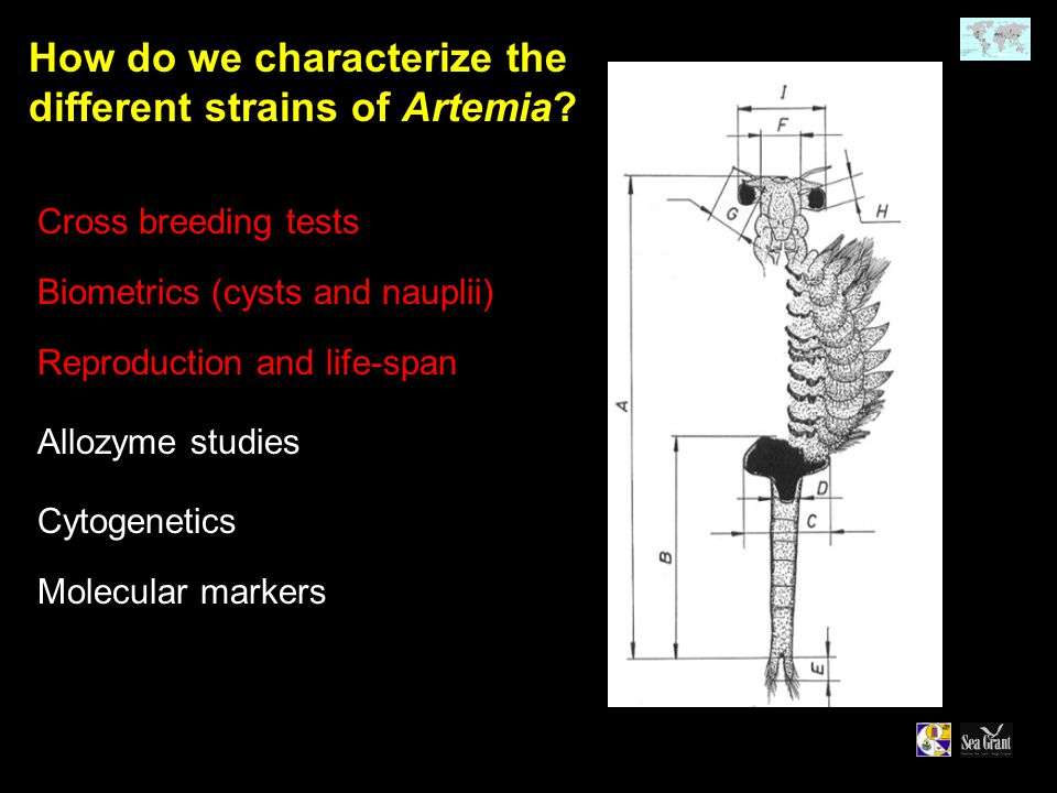 How do we characterize the different strains of Artemia.