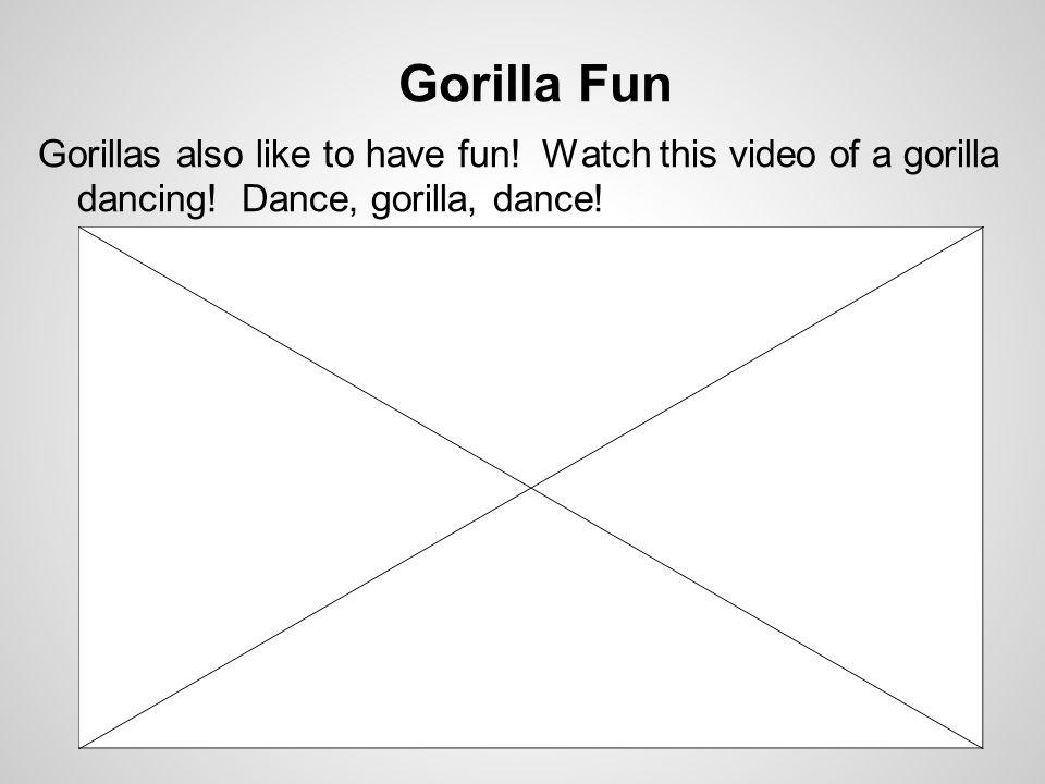 Gorilla Fun Gorillas also like to have fun.Watch this video of a gorilla dancing.