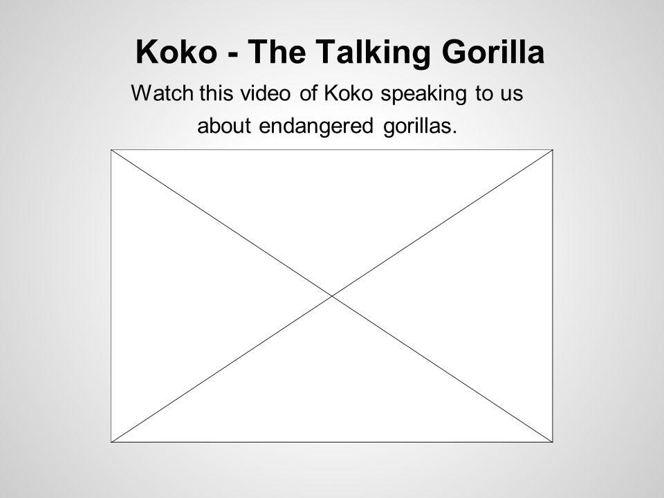 Koko - The Talking Gorilla Watch this video of Koko speaking to us about endangered gorillas.