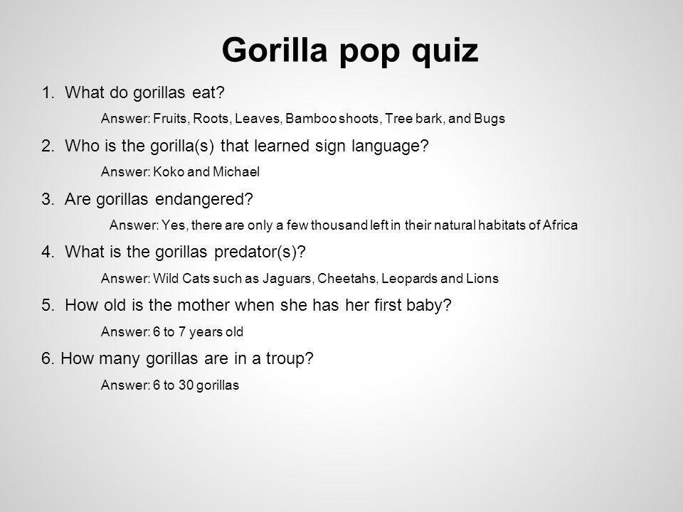 Gorilla pop quiz 1.What do gorillas eat.