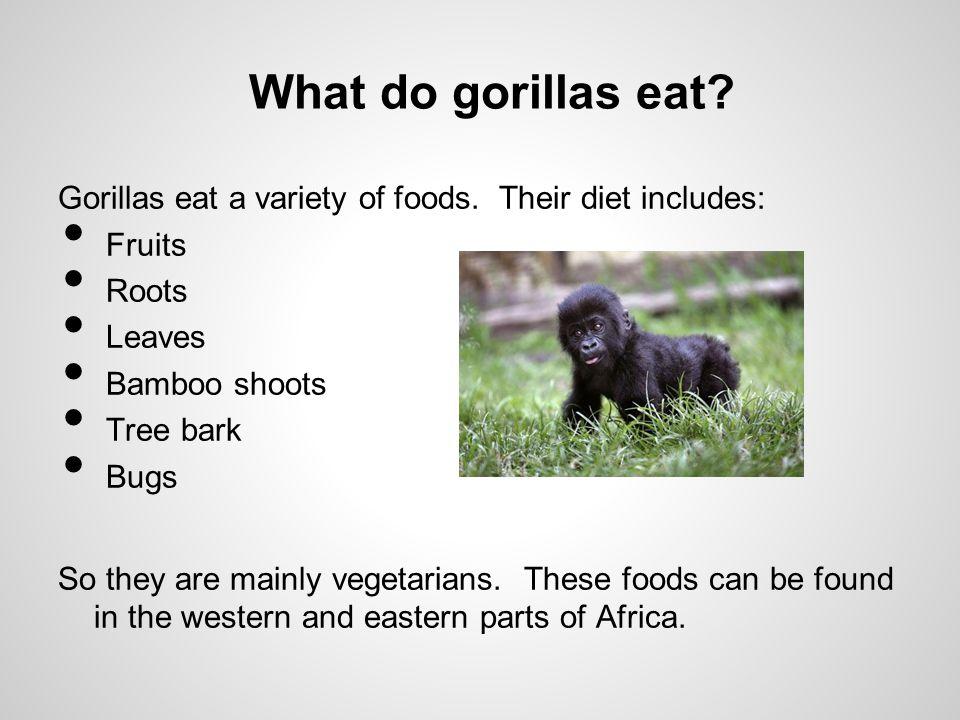 What do gorillas eat.Gorillas eat a variety of foods.