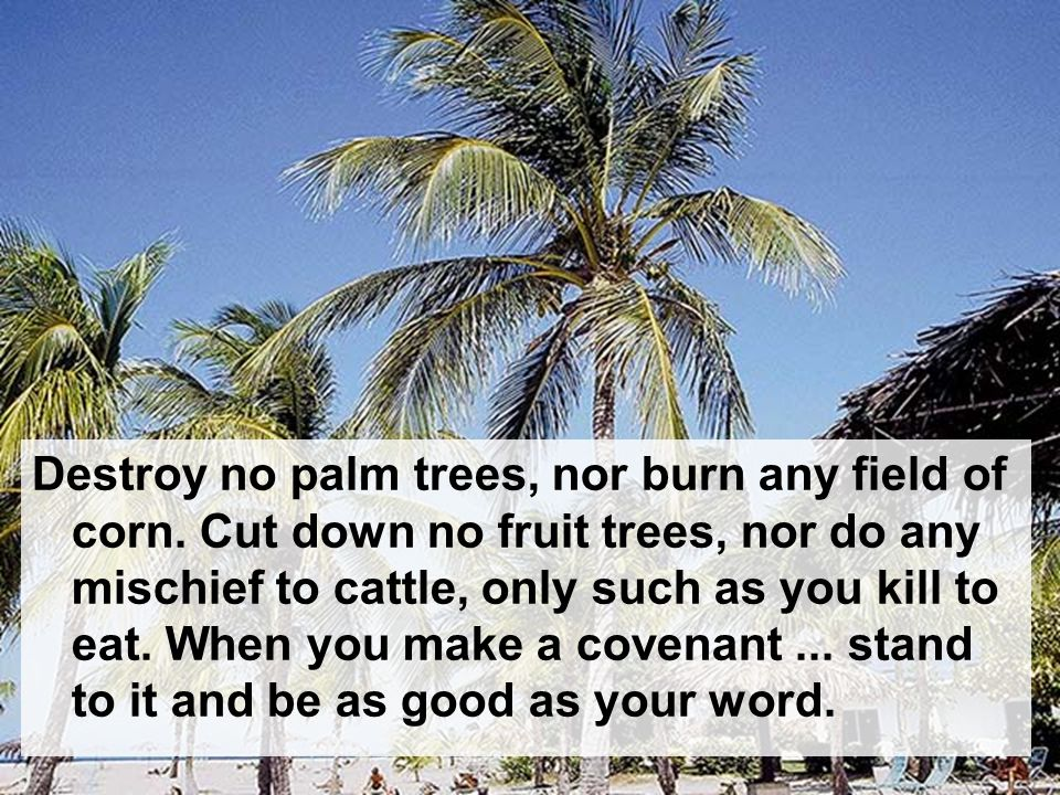 Destroy no palm trees, nor burn any field of corn.