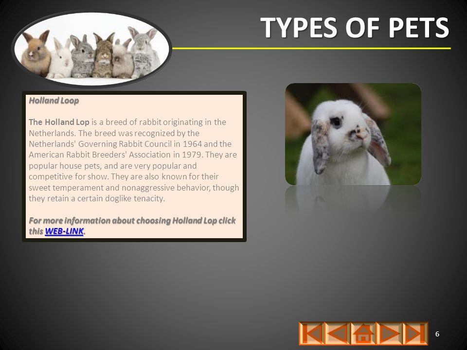 TYPES OF PETS 6 Holland Loop The Holland Lop is a breed of rabbit originating in the Netherlands. The breed was recognized by the Netherlands' Governi