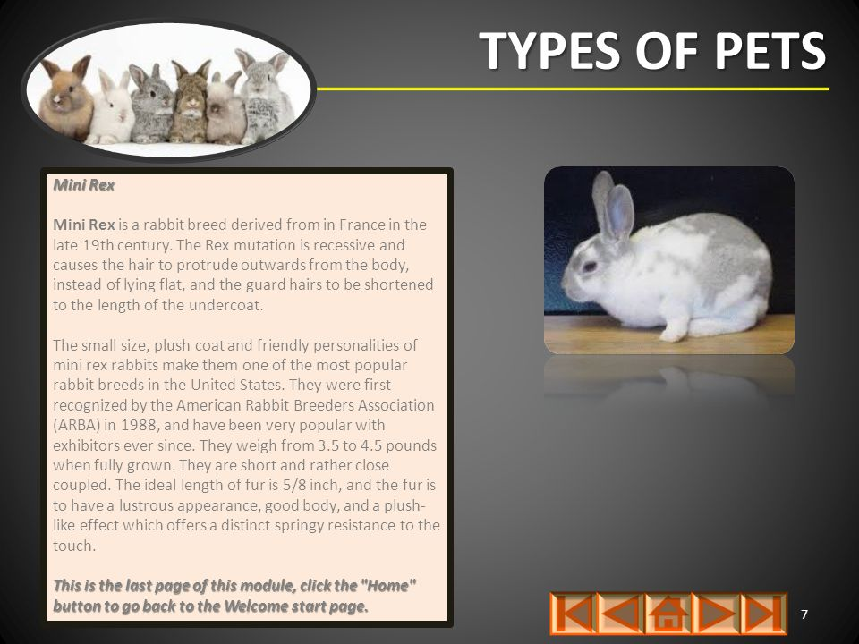 TYPES OF PETS 7 Mini Rex Mini Rex is a rabbit breed derived from in France in the late 19th century. The Rex mutation is recessive and causes the hair