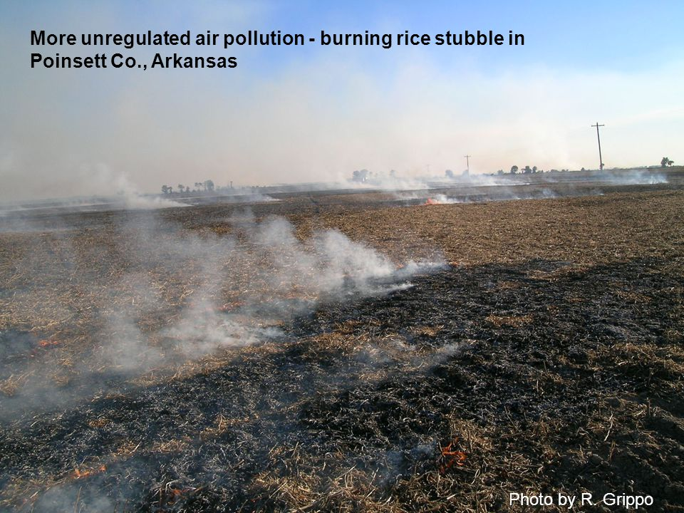 Photo by R. Grippo More unregulated air pollution - burning rice stubble in Poinsett Co., Arkansas