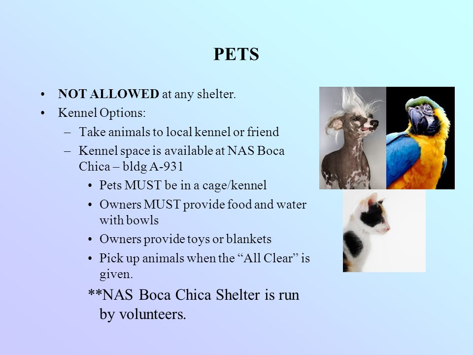 PETS NOT ALLOWED at any shelter. Kennel Options: –Take animals to local kennel or friend –Kennel space is available at NAS Boca Chica – bldg A-931 Pet