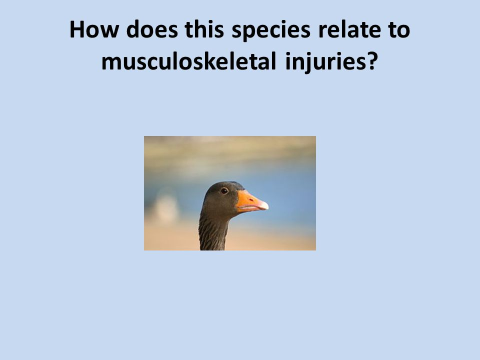 How does this species relate to musculoskeletal injuries?