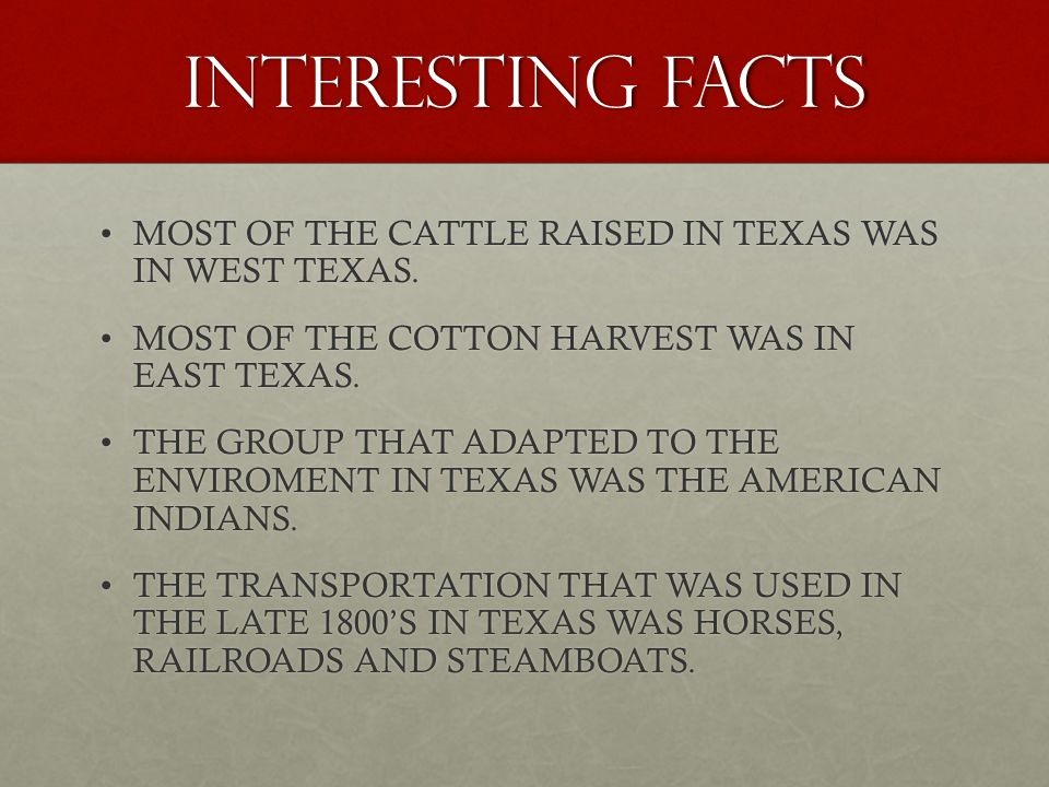 INTERESTING FACTS MOST OF THE CATTLE RAISED IN TEXAS WAS IN WEST TEXAS.MOST OF THE CATTLE RAISED IN TEXAS WAS IN WEST TEXAS.