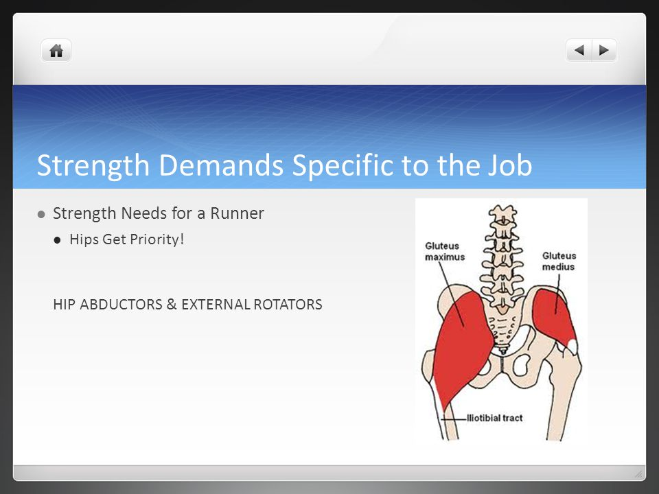 Strength Demands Specific to the Job Strength Needs for a Runner Hips Get Priority.