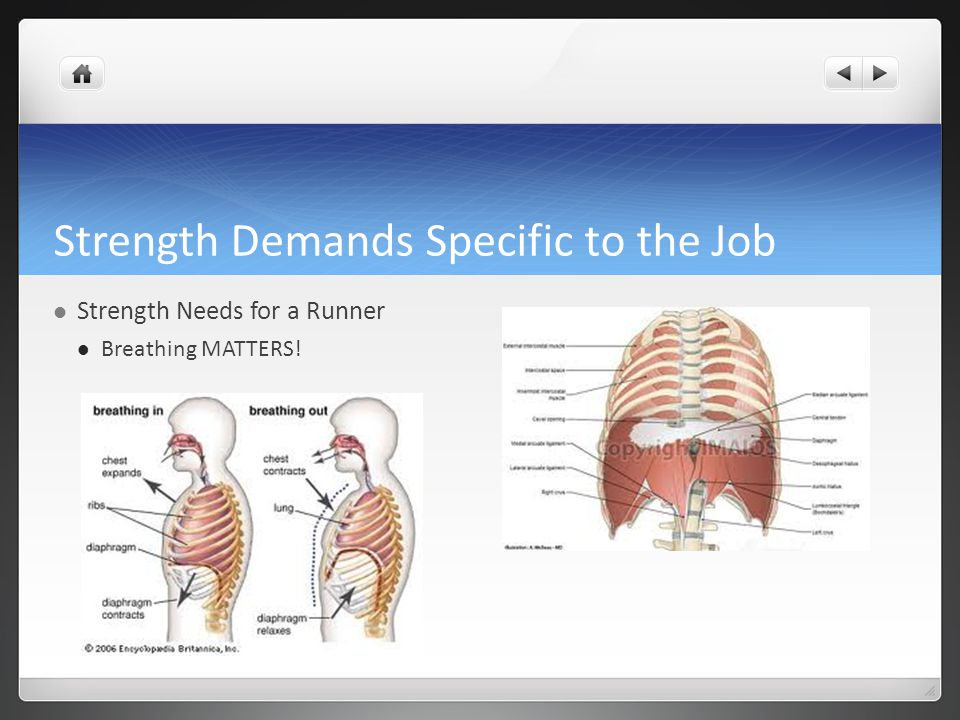 Strength Demands Specific to the Job Strength Needs for a Runner Breathing MATTERS!