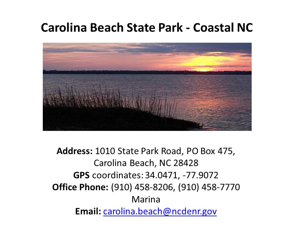 Carolina Beach State Park - Coastal NC Address: 1010 State Park Road, PO Box 475, Carolina Beach, NC 28428 GPS coordinates: 34.0471, -77.9072 Office Phone: (910) 458-8206, (910) 458-7770 Marina Email: carolina.beach@ncdenr.govcarolina.beach@ncdenr.gov