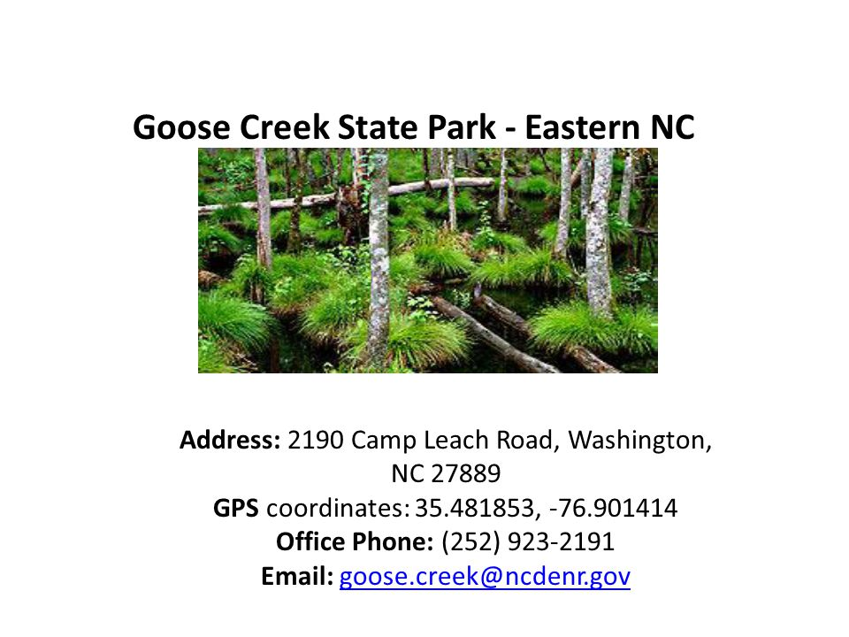 Goose Creek State Park - Eastern NC Address: 2190 Camp Leach Road, Washington, NC 27889 GPS coordinates: 35.481853, -76.901414 Office Phone: (252) 923-2191 Email: goose.creek@ncdenr.govgoose.creek@ncdenr.gov