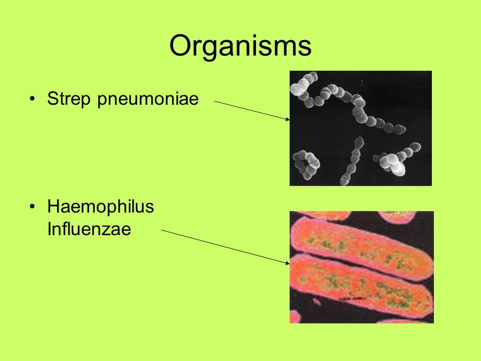 Organisms Strep pneumoniae Haemophilus Influenzae