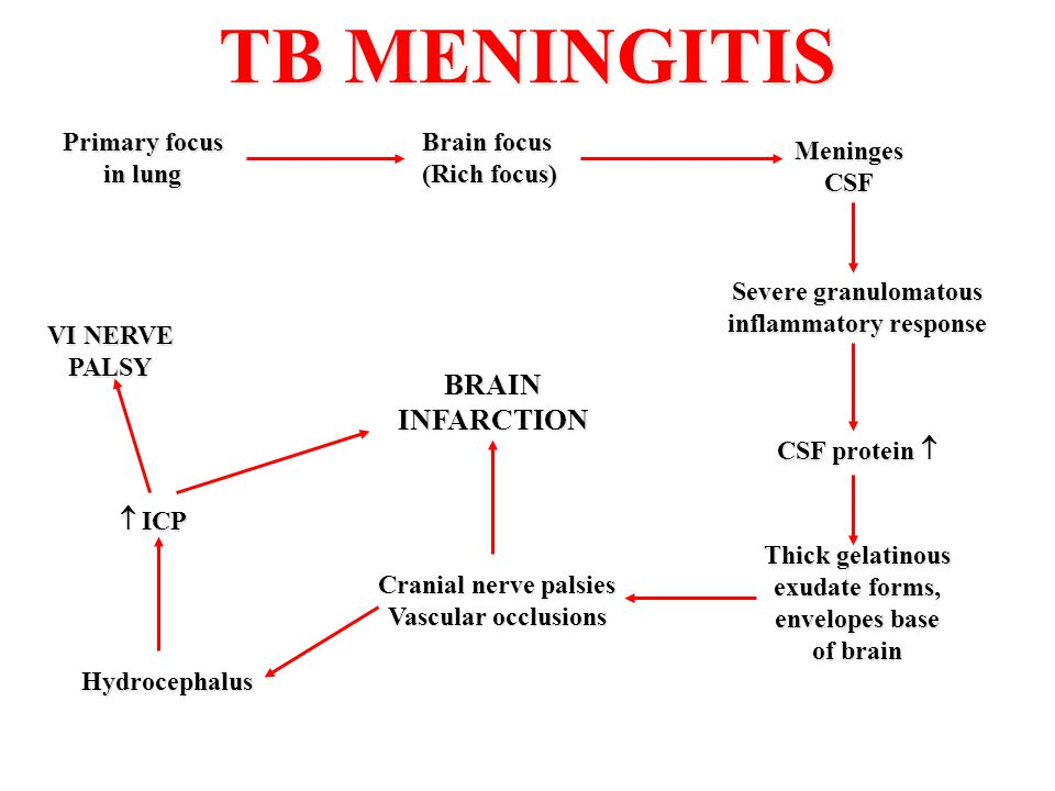 TB MENINGITIS Primary focus in lung Brain focus (Rich focus) MeningesCSF Severe granulomatous inflammatory response CSF protein  Thick gelatinous exu