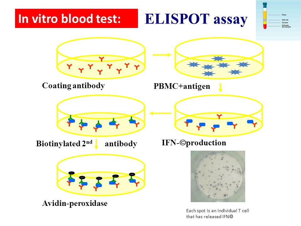 Coating antibody PBMC+antigen IFN-  production Biotinylated 2 nd antibody Avidin-peroxidase In vitro blood test: ELISPOT assay Each spot is an indivi