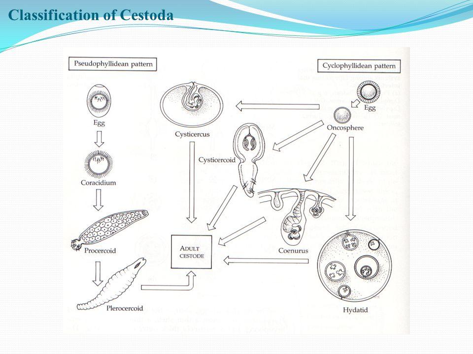 Classification of Cestoda