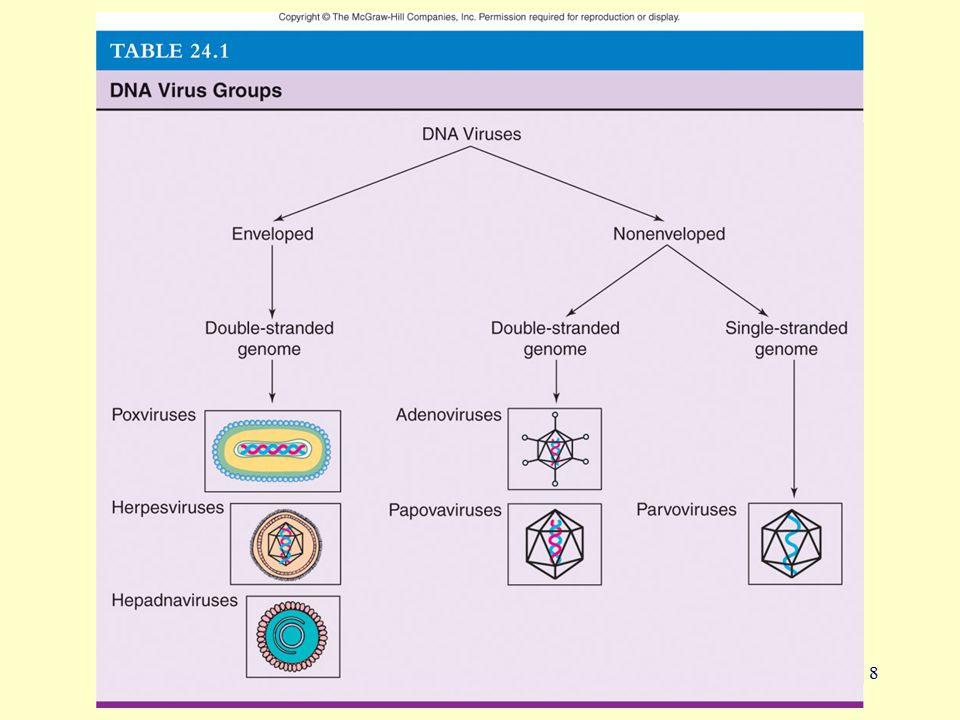 19 Herpes Simplex Virus-1 Latency in trigeminal nerve ganglion