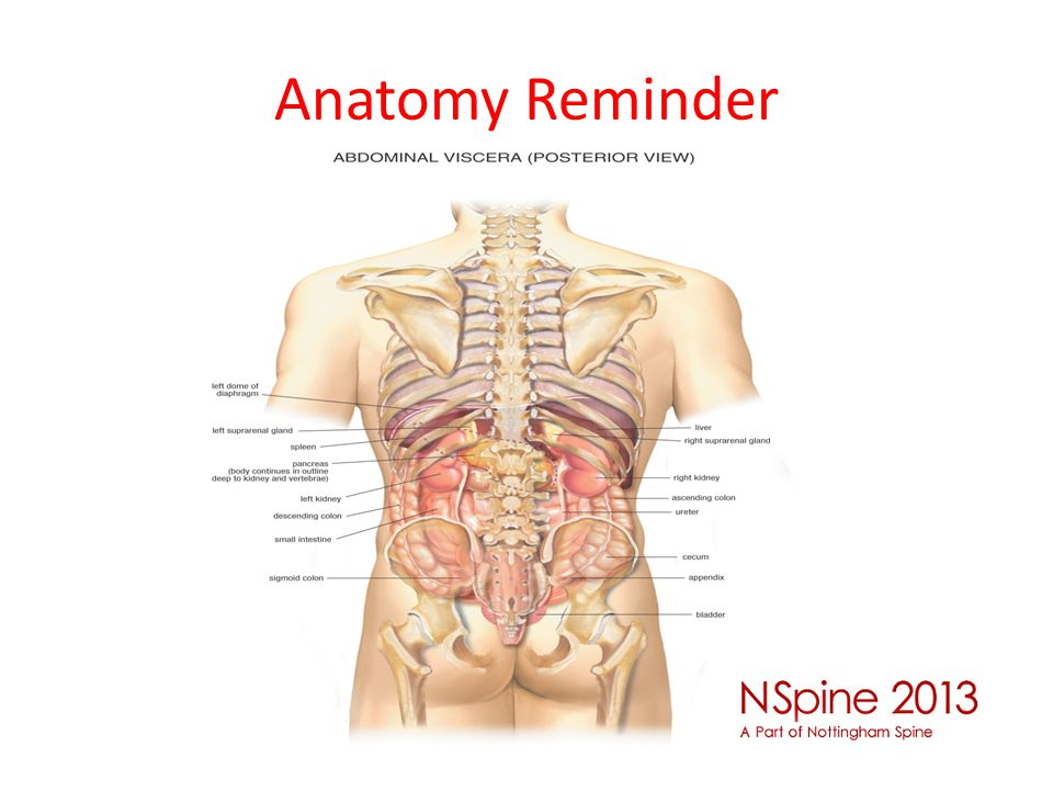 Anatomy Reminder