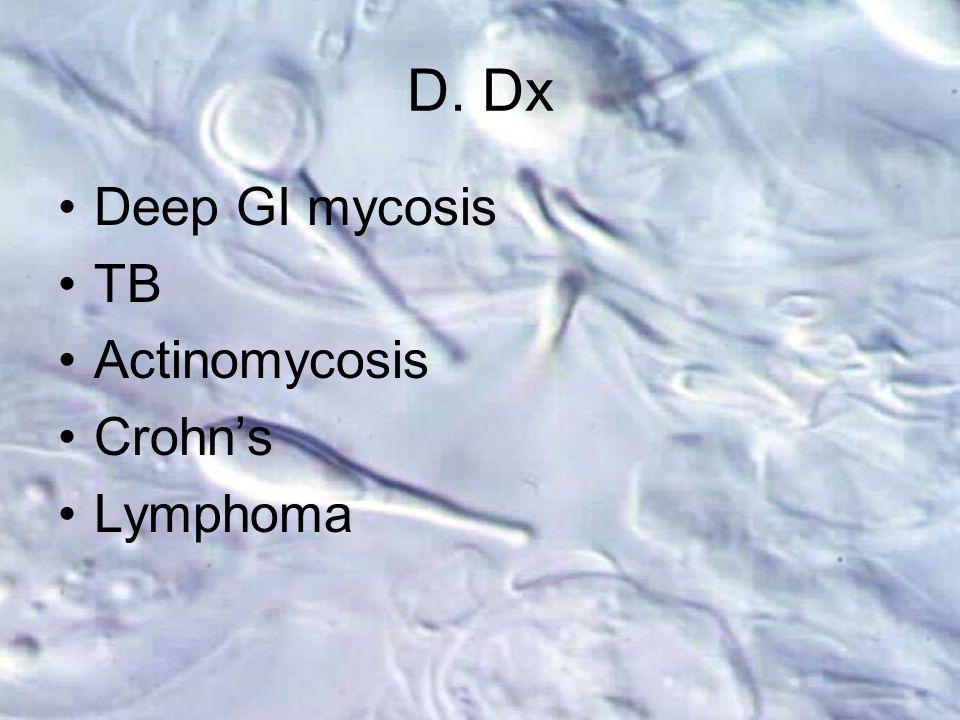 D. Dx Deep GI mycosis TB Actinomycosis Crohn's Lymphoma