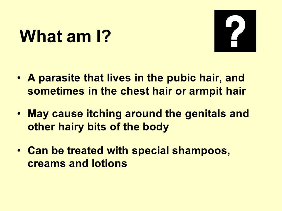 What am I? A parasite that lives in the pubic hair, and sometimes in the chest hair or armpit hair May cause itching around the genitals and other hai