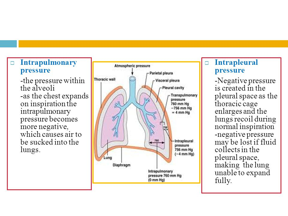  Intrapulmonary pressure -the pressure within the alveoli -as the chest expands on inspiration the intrapulmonary pressure becomes more negative, whi