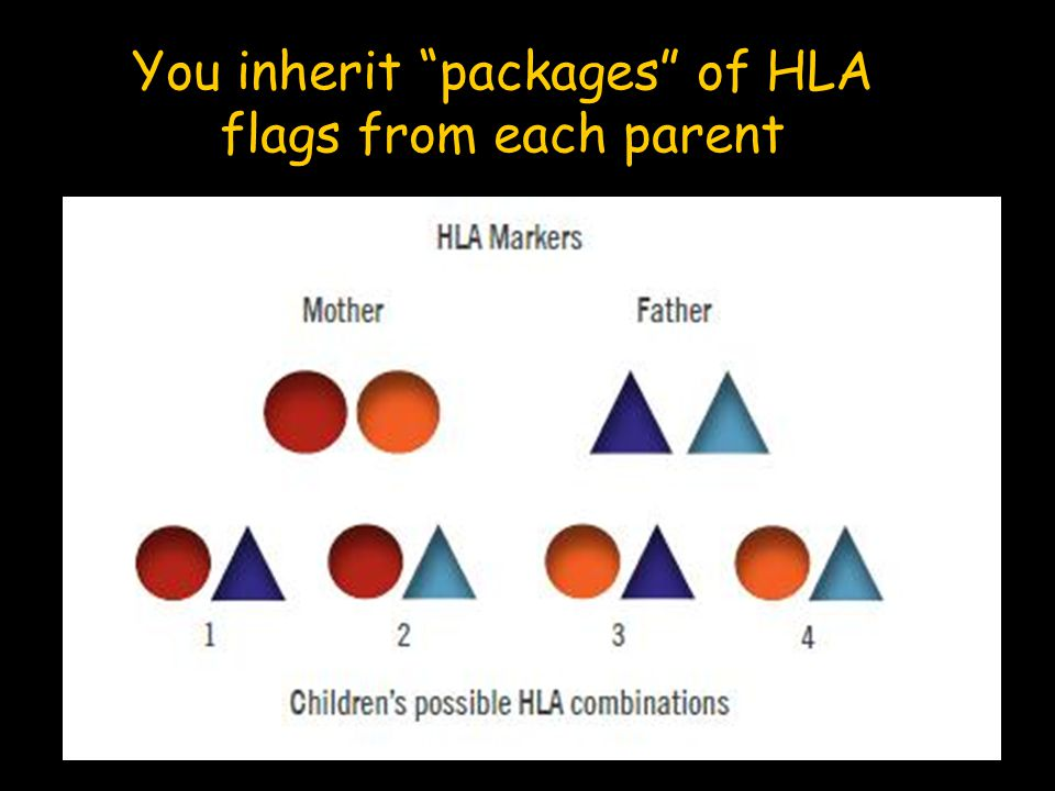 "You inherit ""packages"" of HLA flags from each parent"