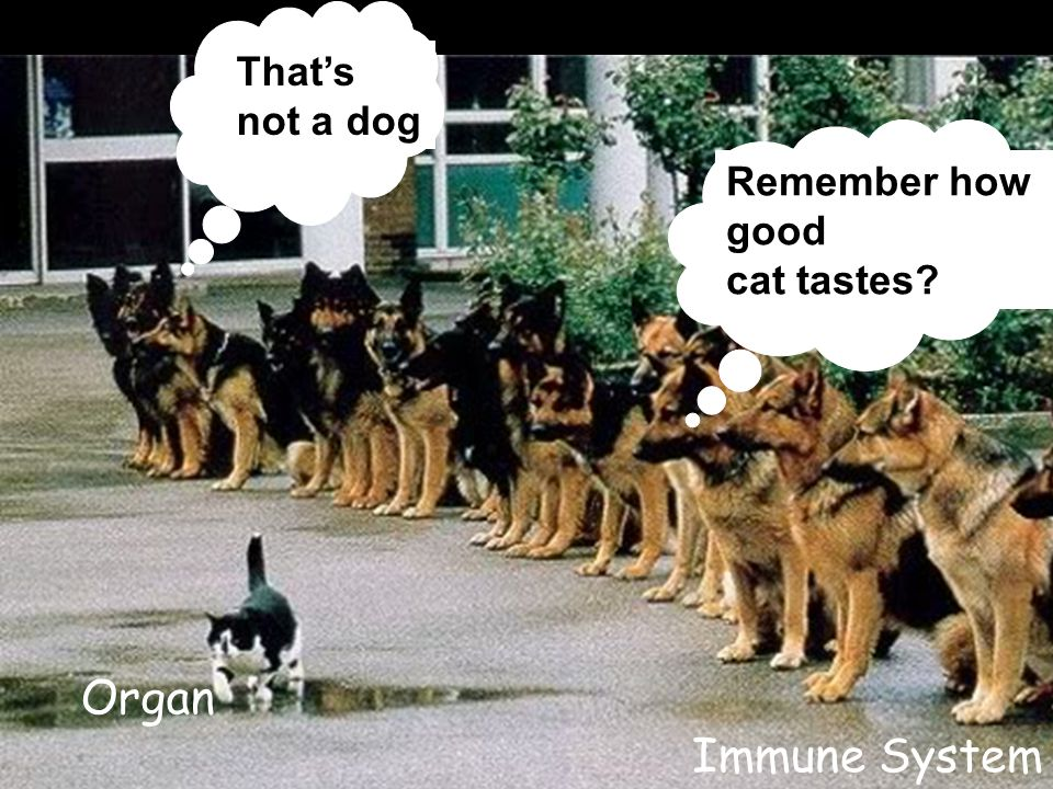 That's not a dog Remember how good cat tastes? Organ Immune System