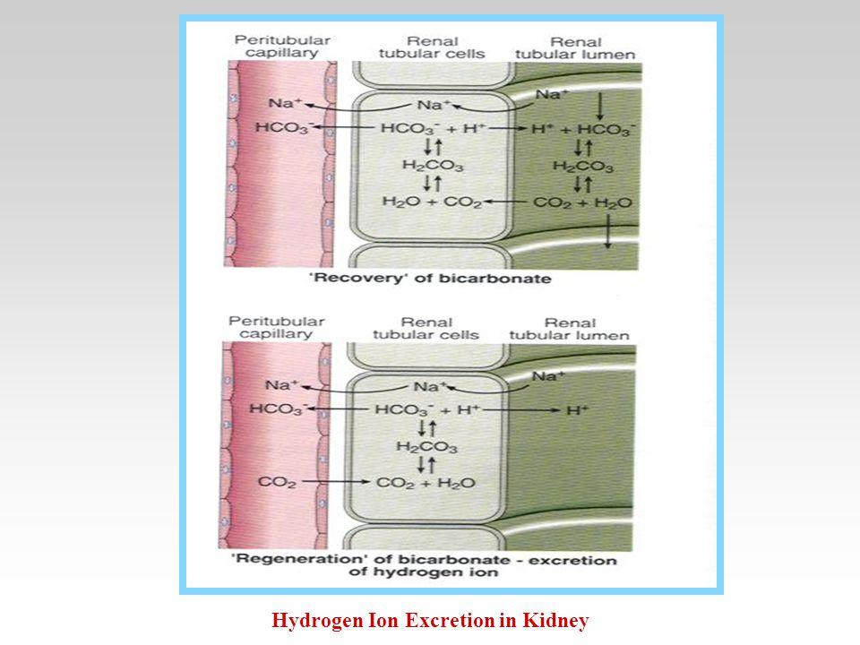 Hydrogen Ion Excretion in Kidney