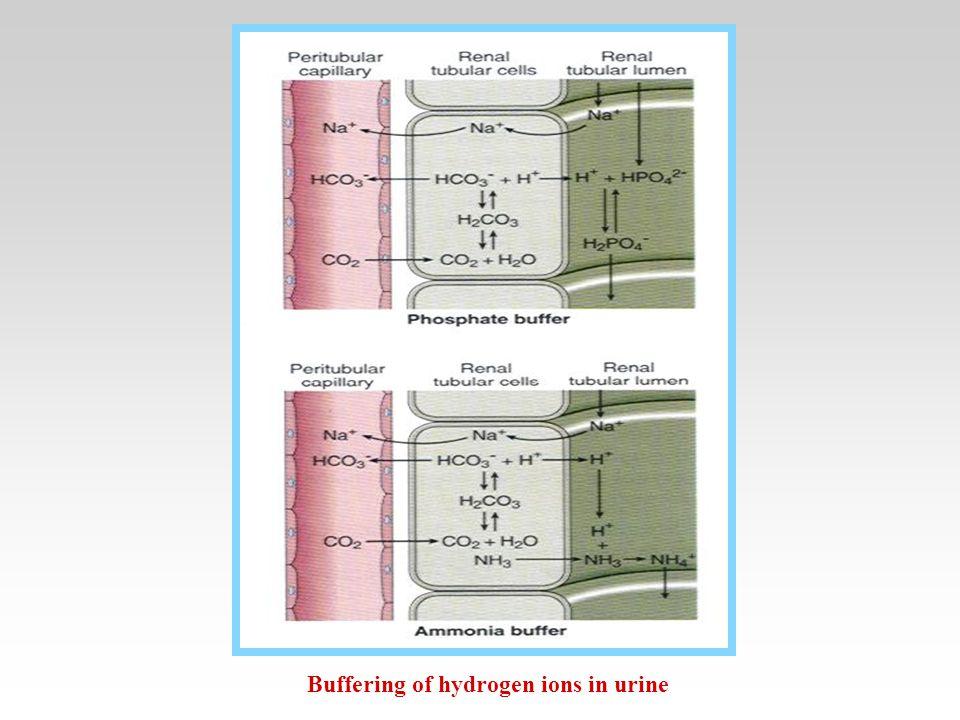 Buffering of hydrogen ions in urine