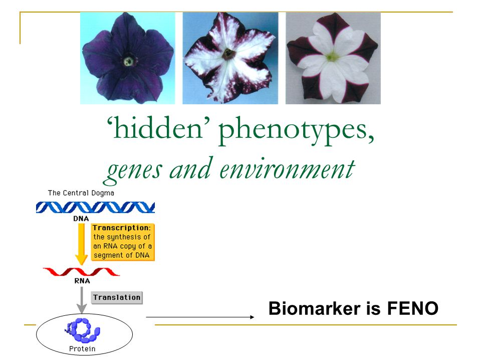 'hidden' phenotypes, genes and environment Biomarker is FENO