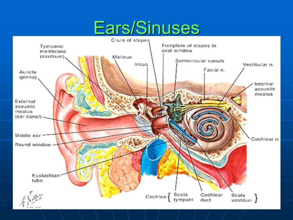 Ears/Sinuses