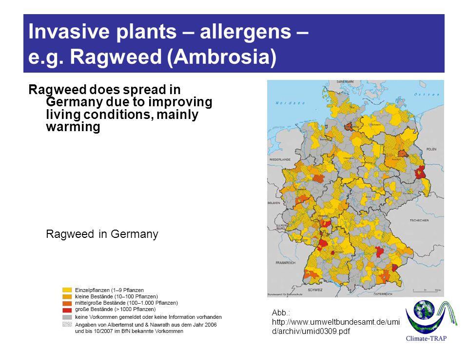 Invasive plants – allergens – e.g.