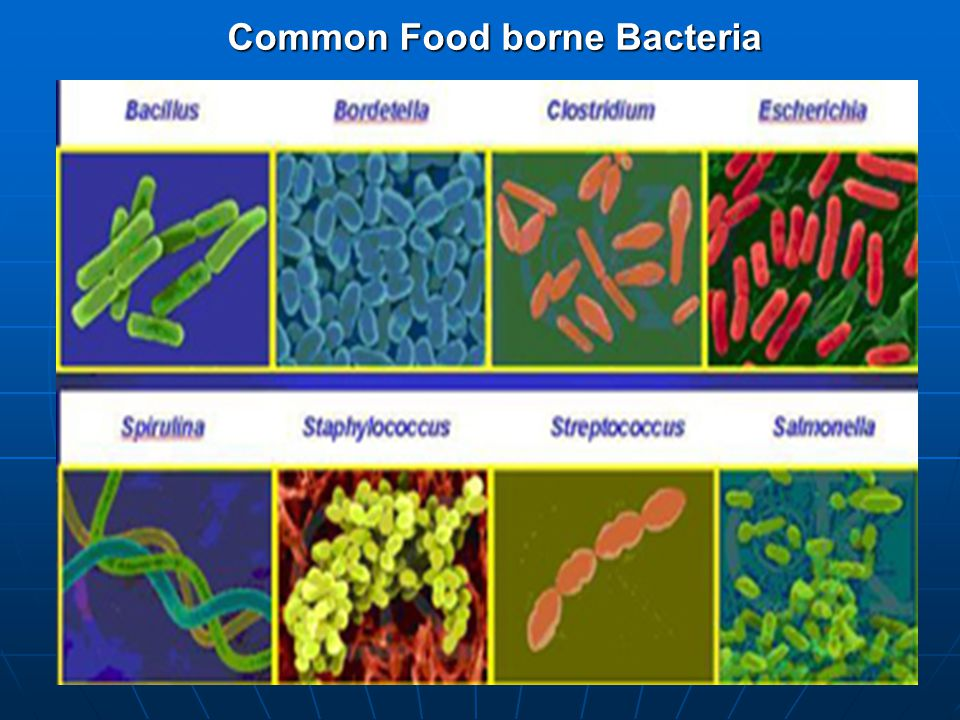 Common Food borne Bacteria