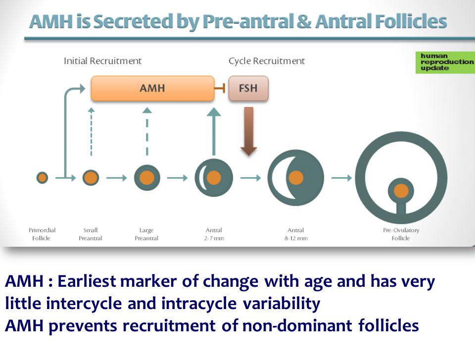 AMH : Earliest marker of change with age and has very little intercycle and intracycle variability AMH prevents recruitment of non-dominant follicles