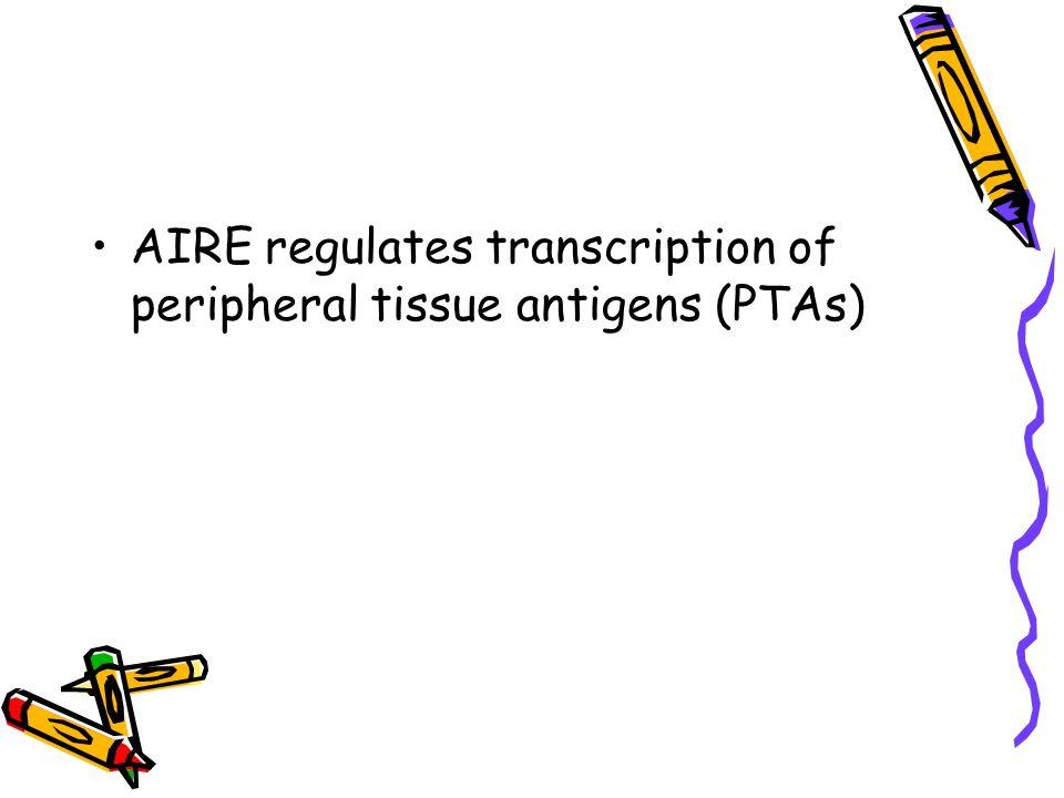 AIRE regulates transcription of peripheral tissue antigens (PTAs)