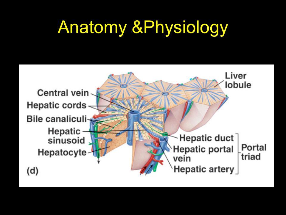 Anatomy &Physiology