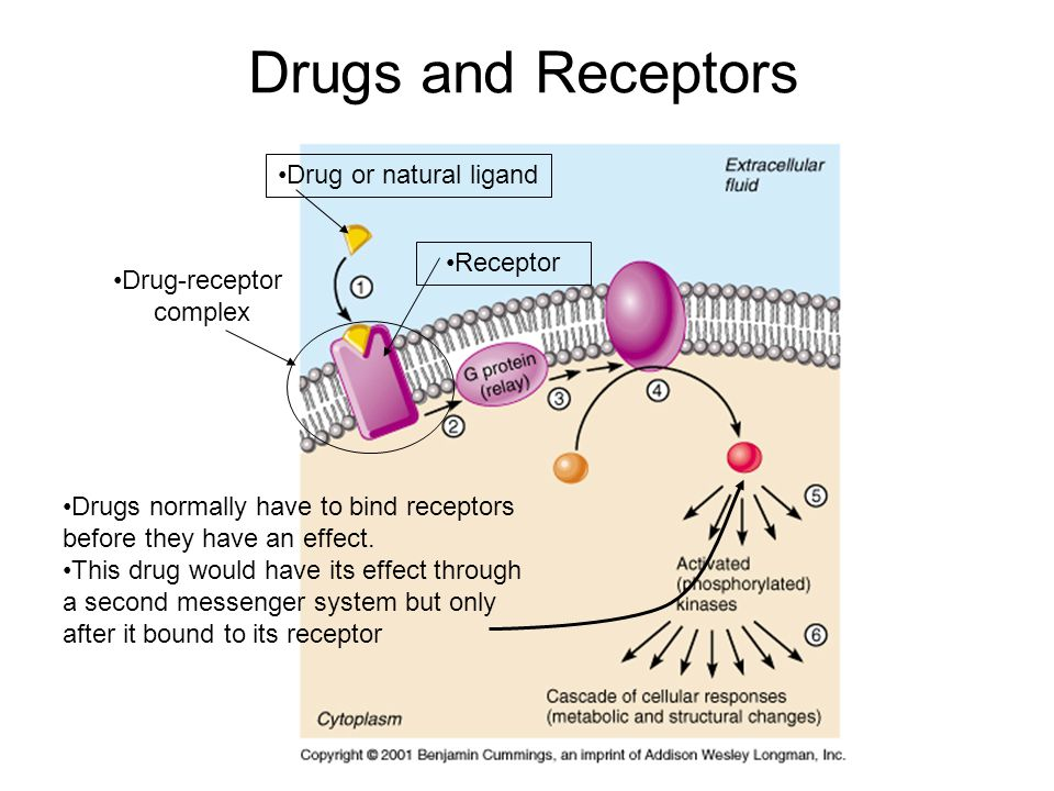 Drugs normally have to bind receptors before they have an effect.