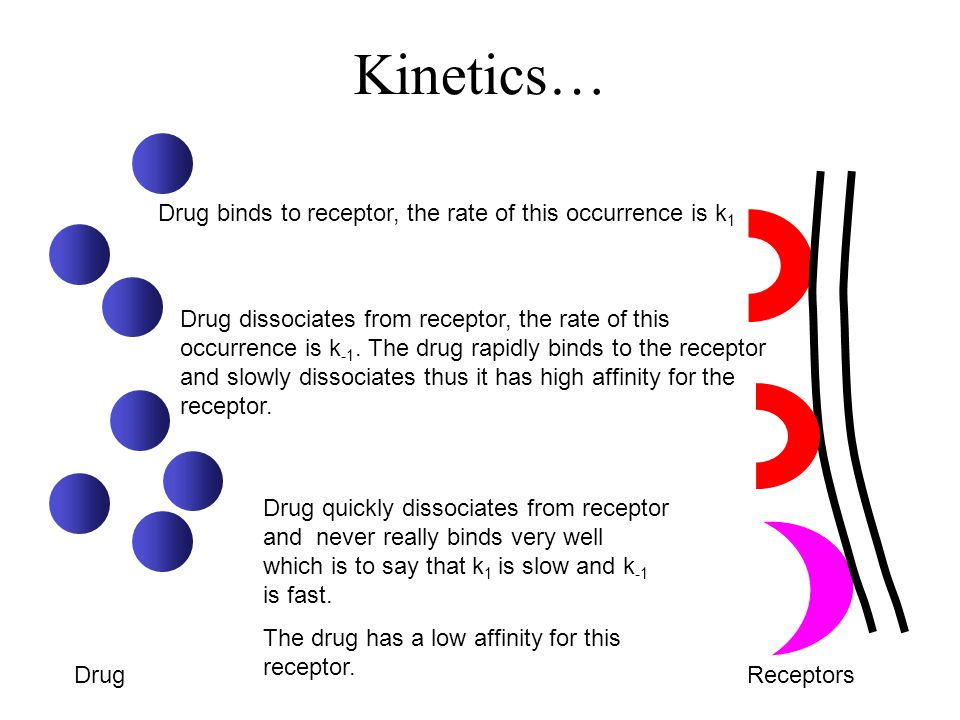 Kinetics… DrugReceptors Drug binds to receptor, the rate of this occurrence is k 1 Drug dissociates from receptor, the rate of this occurrence is k -1