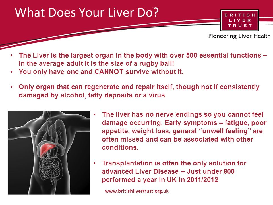 What Does Your Liver Do.