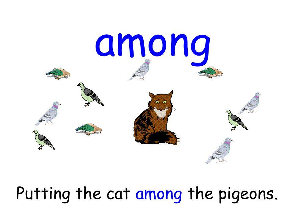 among Putting the cat among the pigeons.