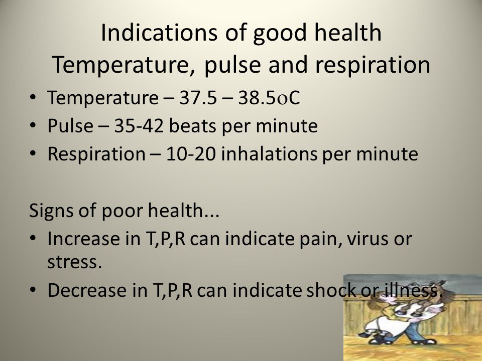 Indications of good health Temperature, pulse and respiration Temperature – 37.5 – 38.5  C Pulse – 35-42 beats per minute Respiration – 10-20 inhalations per minute Signs of poor health...