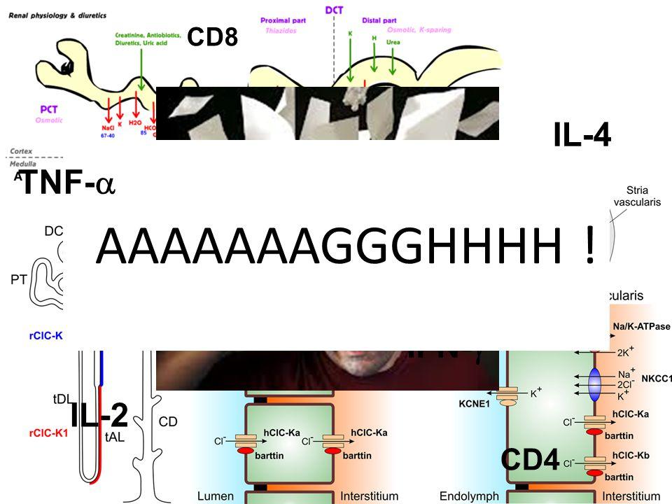 IFN-  AAAAAAAGGGHHHH ! IL-2 TNF-  IL-4 CD4 CD8