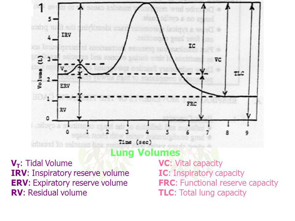 Lung Volumes V T : Tidal VolumeVC: Vital capacity IRV: Inspiratory reserve volume IC: Inspiratory capacity ERV: Expiratory reserve volume FRC: Functio