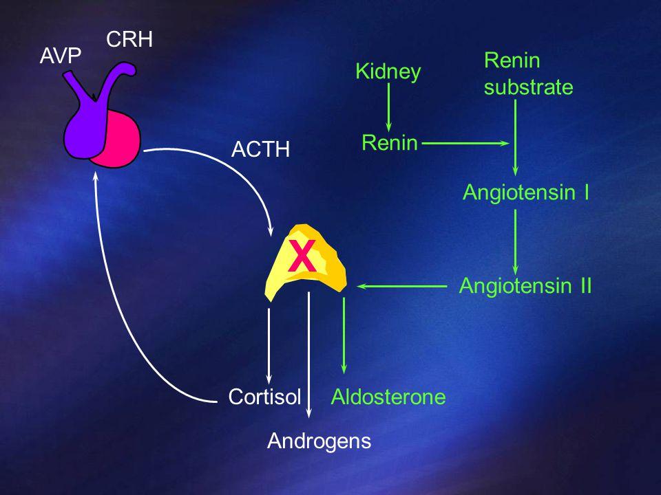 Kidney ACTH CortisolAldosterone Renin Angiotensin II Renin substrate Angiotensin I Androgens CRH AVP X
