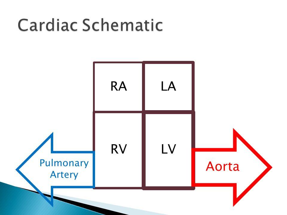 RA LA RV LV Aorta Pulmonary Artery