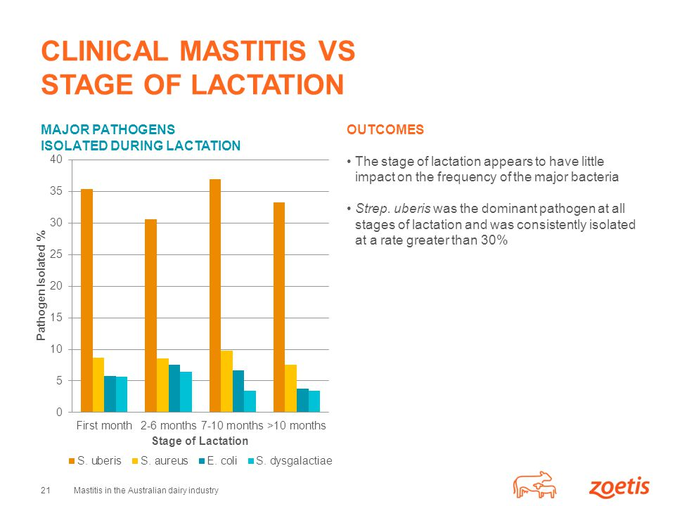 21Mastitis in the Australian dairy industry CLINICAL MASTITIS VS STAGE OF LACTATION MAJOR PATHOGENS ISOLATED DURING LACTATION OUTCOMES The stage of lactation appears to have little impact on the frequency of the major bacteria Strep.