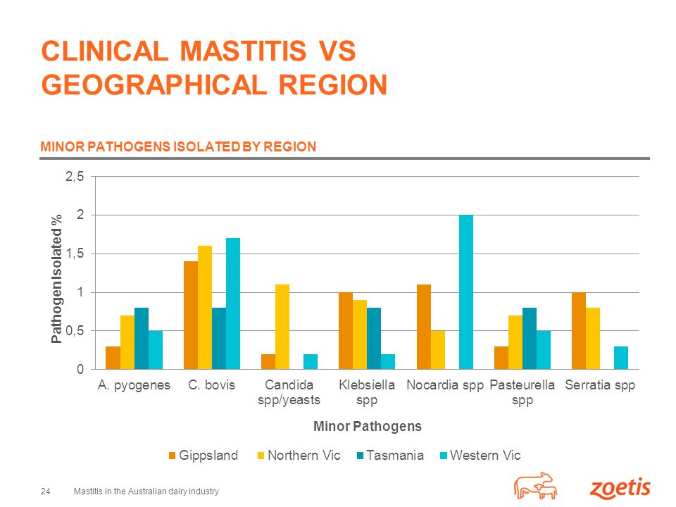 24Mastitis in the Australian dairy industry CLINICAL MASTITIS VS GEOGRAPHICAL REGION MINOR PATHOGENS ISOLATED BY REGION