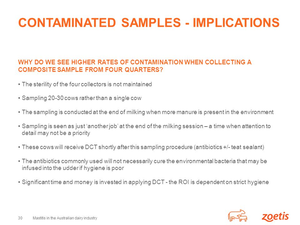 30Mastitis in the Australian dairy industry CONTAMINATED SAMPLES - IMPLICATIONS WHY DO WE SEE HIGHER RATES OF CONTAMINATION WHEN COLLECTING A COMPOSITE SAMPLE FROM FOUR QUARTERS.