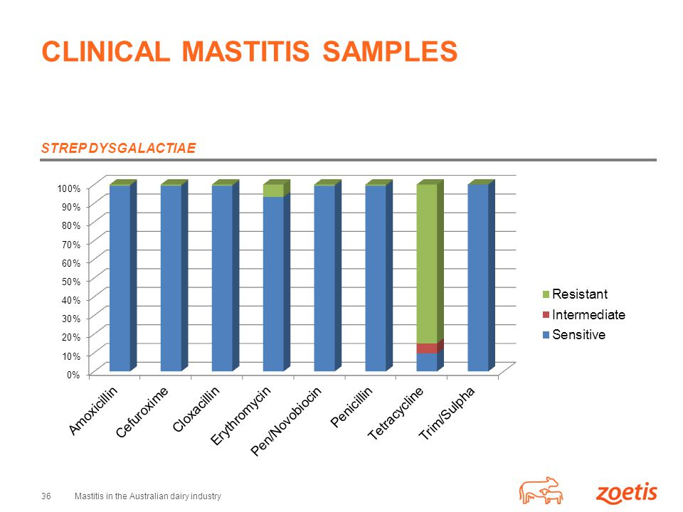 36Mastitis in the Australian dairy industry CLINICAL MASTITIS SAMPLES STREP DYSGALACTIAE